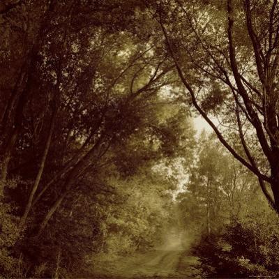 Foggy Trail through Forest