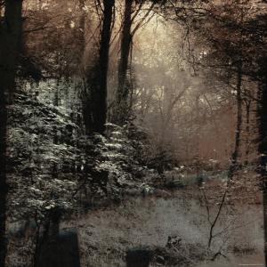 Forest with Peeking Sunlight by Ewa Zauscinska