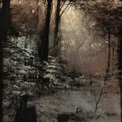 Forest with Peeking Sunlight