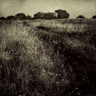 Trail through a Field