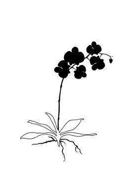 Black Orchid by Explicit Design