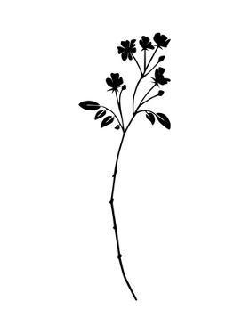 Botanic by Explicit Design
