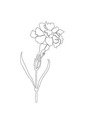 Carnation Lines by Explicit Design