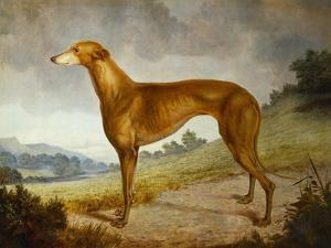 A Tan Greyhound Bitch in an Extensive River Landscape by F. H. Roscoe
