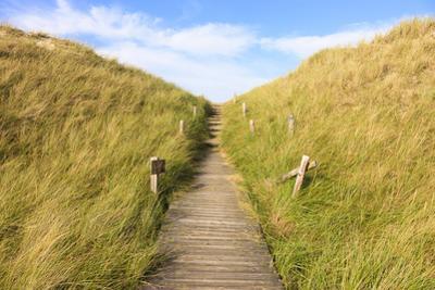 Boardwalk through Grass Covered Dunes, Amrum, Schleswig-Holstein, Germany by F. Lukasseck