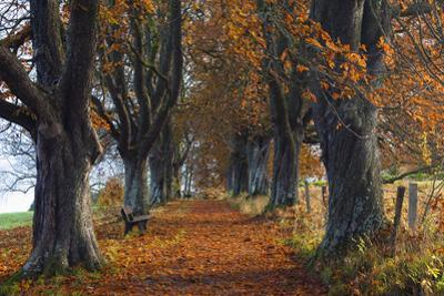 Chestnut Tree Allee, Bavaria, Germany by F. Lukasseck