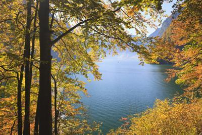 Lake Koenigssee and Beech Foliage in Autumn, Berchtesgadener Land, Bavaria, Germany by F. Lukasseck