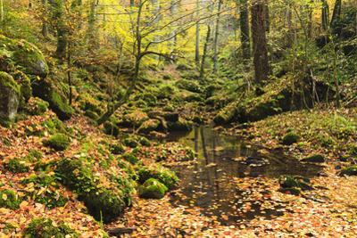 Stream, Monbachtal, Black Forest, Baden-Wurttemberg, Germany by F. Lukasseck