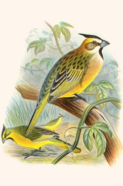Green Cardinal by F.w. Frohawk
