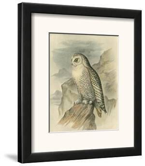 Snowy Owl by F.w. Frohawk