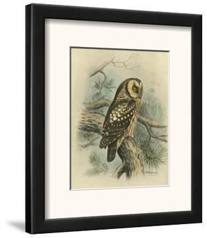 Tengmalm's Owl by F.w. Frohawk