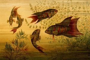 Goldfish by F.W. Kuhnert