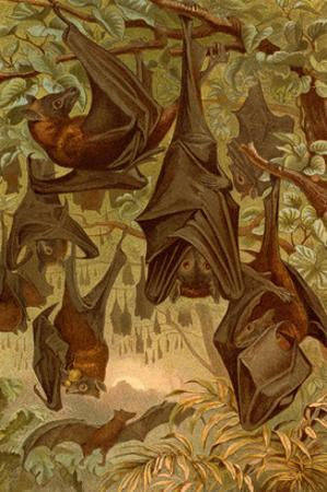 Hanging Bats by F.W. Kuhnert