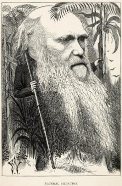 Charles Darwin, Depicted as a Wild Man of the Jungle by F. Waddy