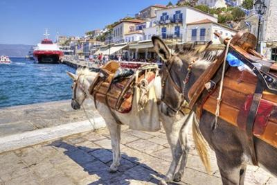 Donkeys on Greek Island by f8grapher