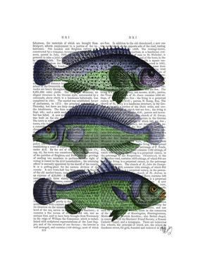 Blue and Green Fish Trio by Fab Funky