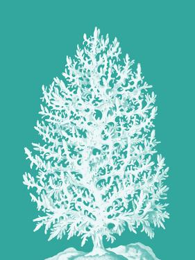 Coral Tree White on Turquoise by Fab Funky
