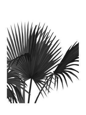 Fan Palm 1, Black On White by Fab Funky