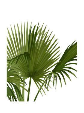 Fan Palm 1, Green on White by Fab Funky