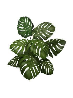 Monstera Plant, Green on White by Fab Funky