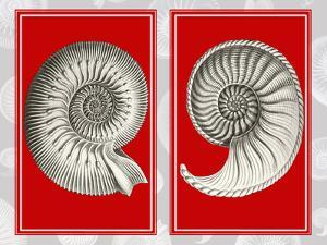 Nautilus Shells On Red by Fab Funky