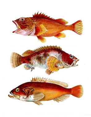 Orange Fish Trio by Fab Funky