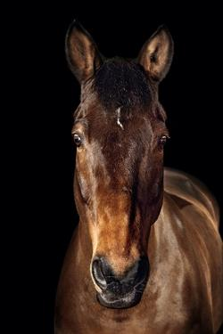 Horse by Fabio Petroni