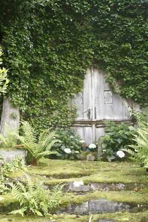 Garden, Wooden Door, Overgrown