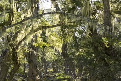 https://imgc.allpostersimages.com/img/posters/fairytale-forest-tierra-del-fuego-argentina_u-L-PWFENJ0.jpg?p=0