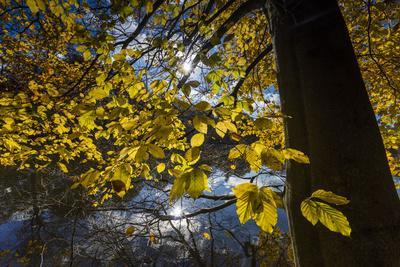 Autumn Foliage in the Lake