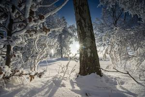 Deeply Snow-Covered Winter Scenery with Bright Sunshine, Saxony, Germany by Falk Hermann