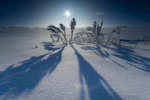 Lonesome Plain in Iced Up Winter Scenery, Triebtal, Vogtland, Saxony, Germany by Falk Hermann
