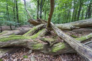 Original Deciduous Forest, Triebtal, Vogtland, Saxony, Germany by Falk Hermann