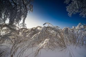 Snow-Covered Winter Scenery, Triebtal, Vogtland, Saxony, Germany by Falk Hermann