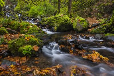 https://imgc.allpostersimages.com/img/posters/fall-color-along-starvation-creek-falls-columbia-gorge-oregon_u-L-PU3EB70.jpg?p=0