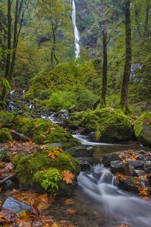 https://imgc.allpostersimages.com/img/posters/fall-color-along-starvation-creek-falls-columbia-gorge-oregon_u-L-PU3EBM0.jpg?artPerspective=n