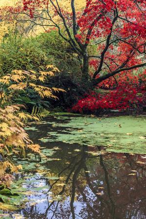 https://imgc.allpostersimages.com/img/posters/fall-colors-arboretum-seattle-washington-usa_u-L-PXR9ZH0.jpg?p=0