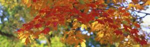 Fall Foliage, Guilford, Baltimore City, Maryland, USA