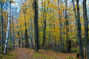 Fall Foliage Photo Print Poster