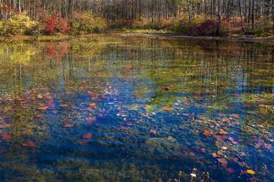 https://imgc.allpostersimages.com/img/posters/fall-foliage-reflection-in-lake-water_u-L-Q1GTF390.jpg?p=0