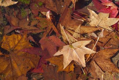 https://imgc.allpostersimages.com/img/posters/fall-foliage_u-L-Q1GTH480.jpg?p=0