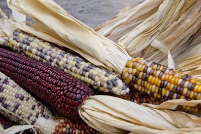 https://imgc.allpostersimages.com/img/posters/fall-harvest-colorful-indian-corn-california-usa_u-L-PN6P960.jpg?artPerspective=n