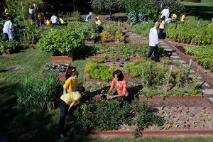 Fall Harvest of the White House Kitchen Garden,  Michelle Obama, White House Chefs and Children