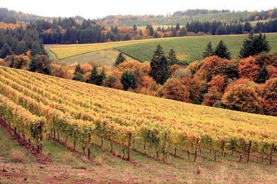https://imgc.allpostersimages.com/img/posters/fall-in-wine-country-i_u-L-Q10PTK80.jpg?p=0