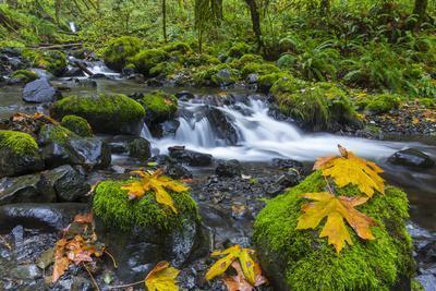https://imgc.allpostersimages.com/img/posters/fall-leaves-along-gorton-creek-in-the-columbia-gorge-oregon_u-L-PU3ECG0.jpg?p=0