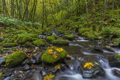 https://imgc.allpostersimages.com/img/posters/fall-leaves-along-gorton-creek-in-the-columbia-gorge-oregon_u-L-PU3ECV0.jpg?p=0