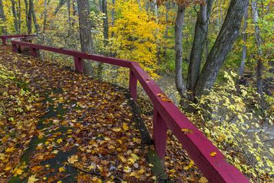 https://imgc.allpostersimages.com/img/posters/fall-leaves-on-fall-fork-of-clifty-creek-near-newbern-indiana_u-L-PU3F2C0.jpg?p=0