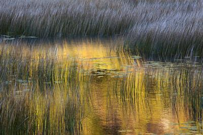 https://imgc.allpostersimages.com/img/posters/fall-reflections-in-a-marsh-acadia-national-park-maine-usa_u-L-PN720X0.jpg?artPerspective=n