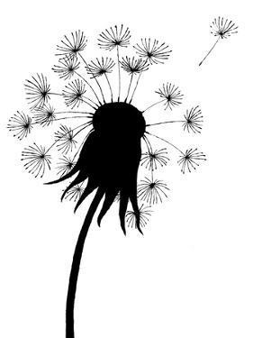 Dandelion Black And White by falonkoontz