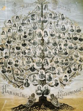 Family Tree of the Imperial Dynasty of the Habsburgs